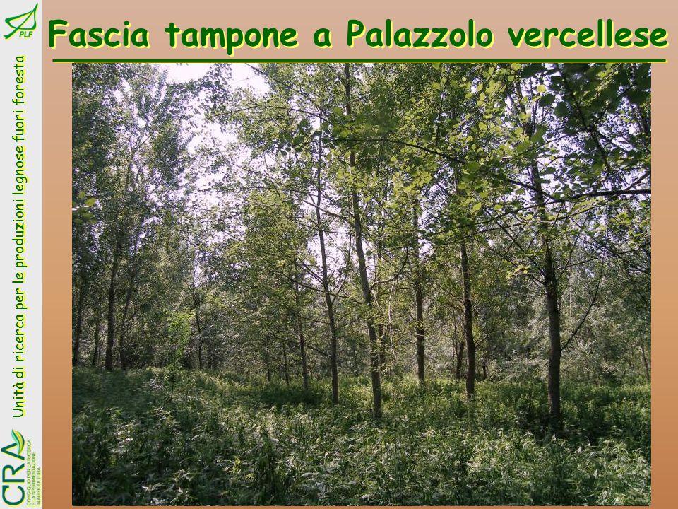 Unità di ricerca per le produzioni legnose fuori foresta Piante micorrizate