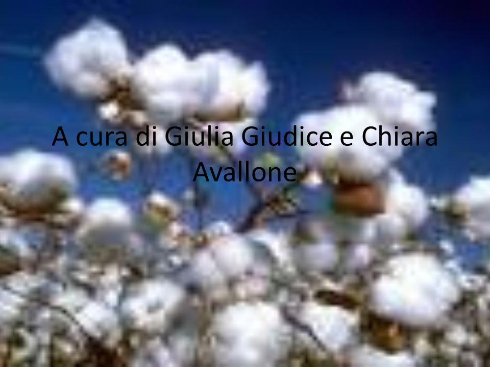 A cura di Giulia Giudice e Chiara Avallone