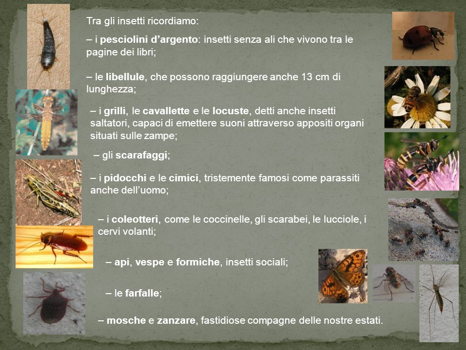 Tra gli insetti ricordiamo: – i pesciolini d'argento: insetti senza ali che vivono tra le pagine dei libri; – le libellule, che possono raggiungere anche 13 cm di lunghezza; – i grilli, le cavallette e le locuste, detti anche insetti saltatori, capaci di emettere suoni attraverso appositi organi situati sulle zampe; – gli scarafaggi; – i pidocchi e le cimici, tristemente famosi come parassiti anche dell'uomo; – i coleotteri, come le coccinelle, gli scarabei, le lucciole, i cervi volanti; – api, vespe e formiche, insetti sociali; – le farfalle; – mosche e zanzare, fastidiose compagne delle nostre estati.