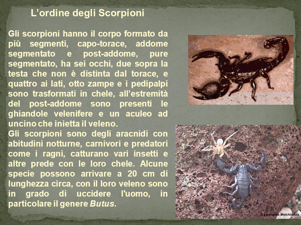 Esistono moltissime specie di ragni, alcune delle quali velenose, come la Vedova Nera. I ragni nutrendosi di molti insetti dannosi, svolgono un import