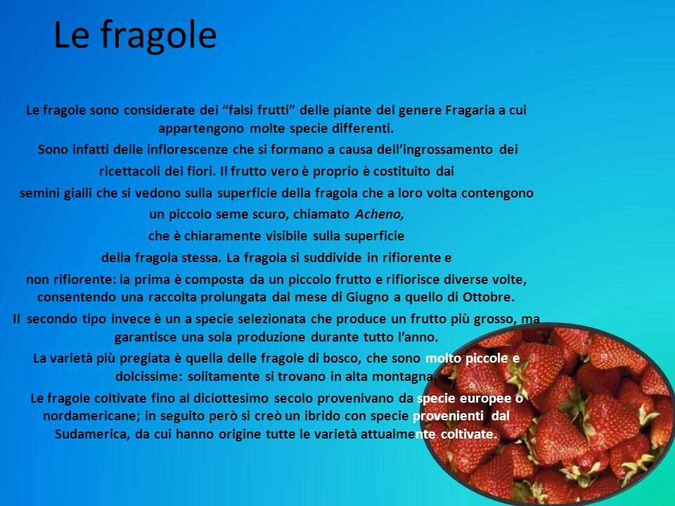 """Le fragole Le fragole sono considerate dei """"falsi frutti"""" delle piante del genere Fragaria a cui appartengono molte specie differenti. Sono infatti de"""