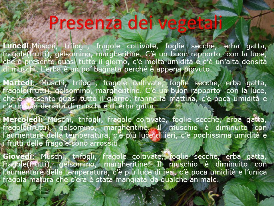 Presenza dei vegetali Lunedì:Muschi, trifogli, fragole coltivate, foglie secche, erba gatta, fragole(frutti), gelsomino, margheritine. C'è un buon rap