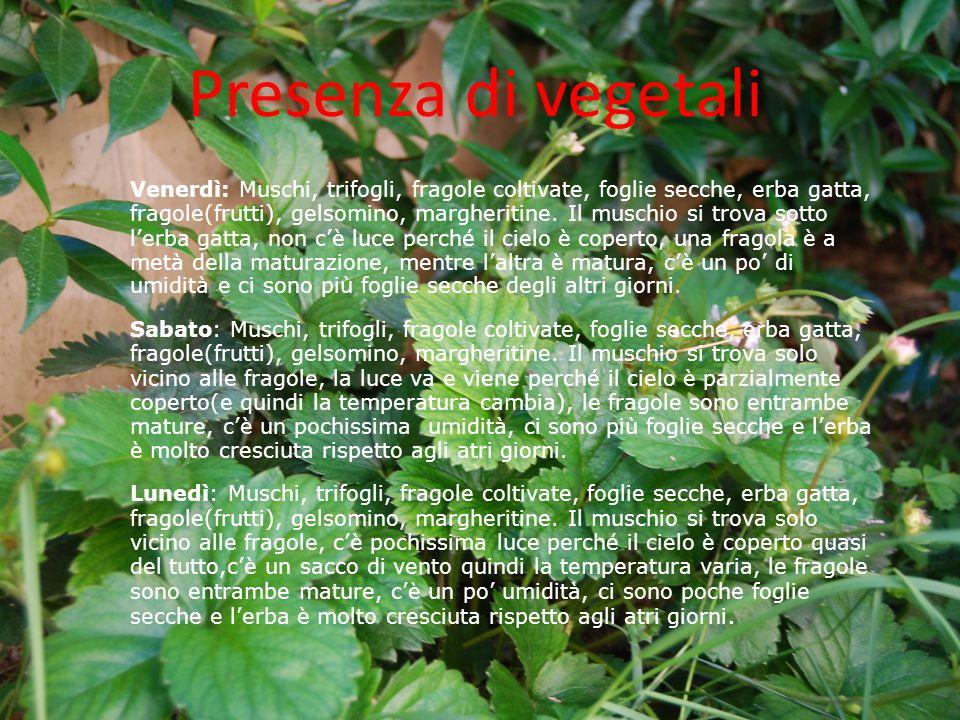 Presenza di vegetali Venerdì: Muschi, trifogli, fragole coltivate, foglie secche, erba gatta, fragole(frutti), gelsomino, margheritine. Il muschio si