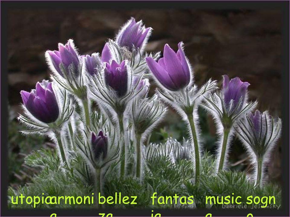 umus del fiorire,