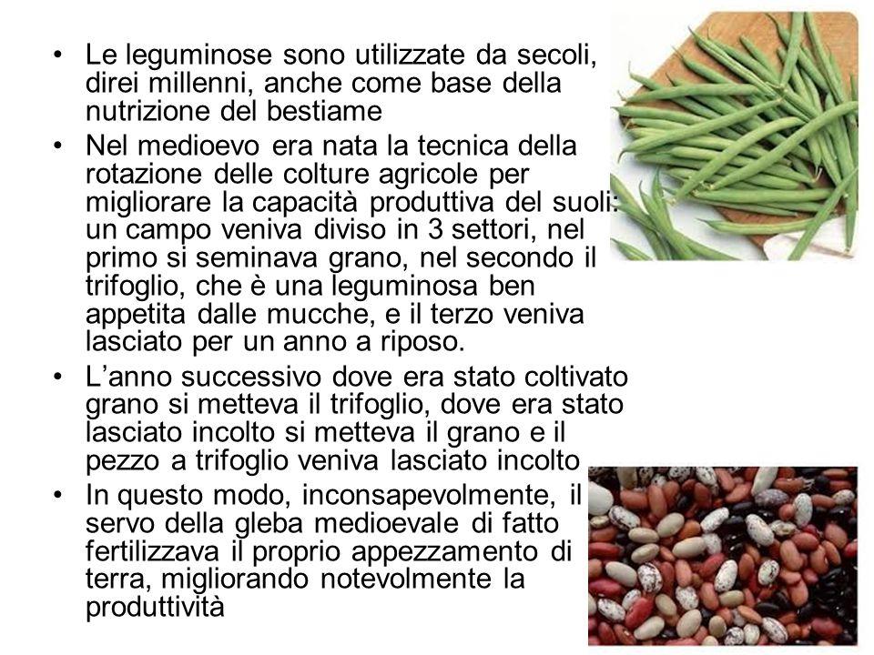Le leguminose sono utilizzate da secoli, direi millenni, anche come base della nutrizione del bestiame Nel medioevo era nata la tecnica della rotazion