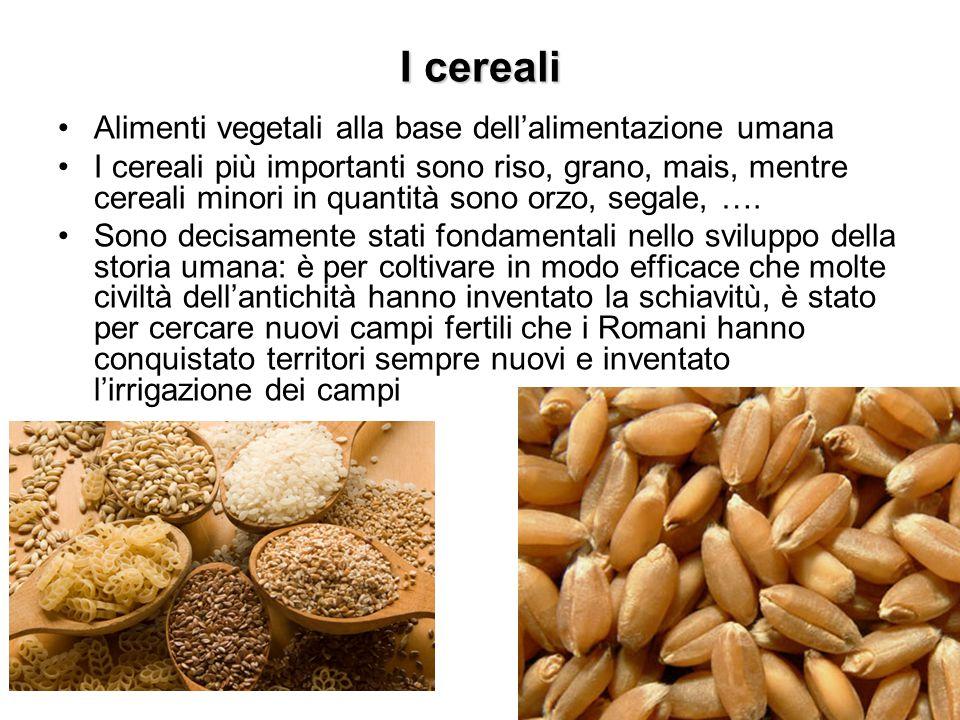 I cereali, o Graminaceae, sono vegetali tipici di zone molto soleggiate (in natura prati o savane, ad esempio, probabilmente gli ambienti dove la nostra specie si è evoluta e separata dalle altre scimmie) e i loro semi, carichi di amido, vengono utilizzati dopo cottura interi (ad esempio il riso) o macinati (ad esempio le farine) I semi, che sono la parte edibile della pianta, vengono essiccati e macinati, per ottenere farina (non sempre, ovviamente: il riso viene utilizzato in seme, ad esempio) Le foglioline che ricoprono i semi vengono prima separate per avere un prodotto più pulito e di facile conservazione: spesso vengono successivamente in parte aggiunte alla farina (farina integrale) o vendute come prodotto dietetico (crusca)