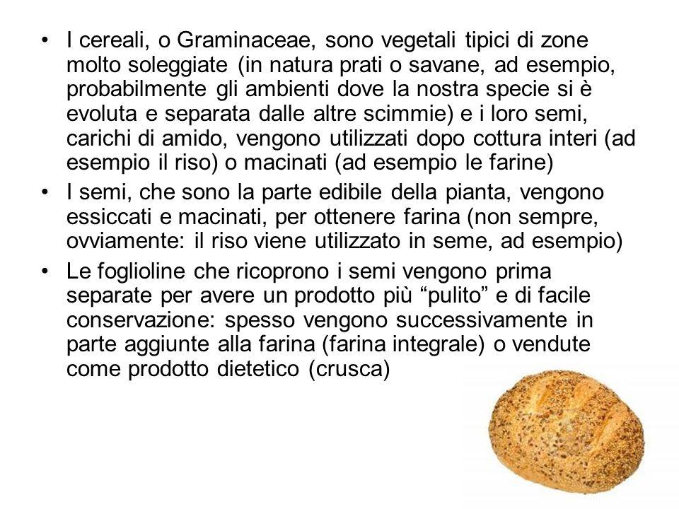 I cereali, o Graminaceae, sono vegetali tipici di zone molto soleggiate (in natura prati o savane, ad esempio, probabilmente gli ambienti dove la nost