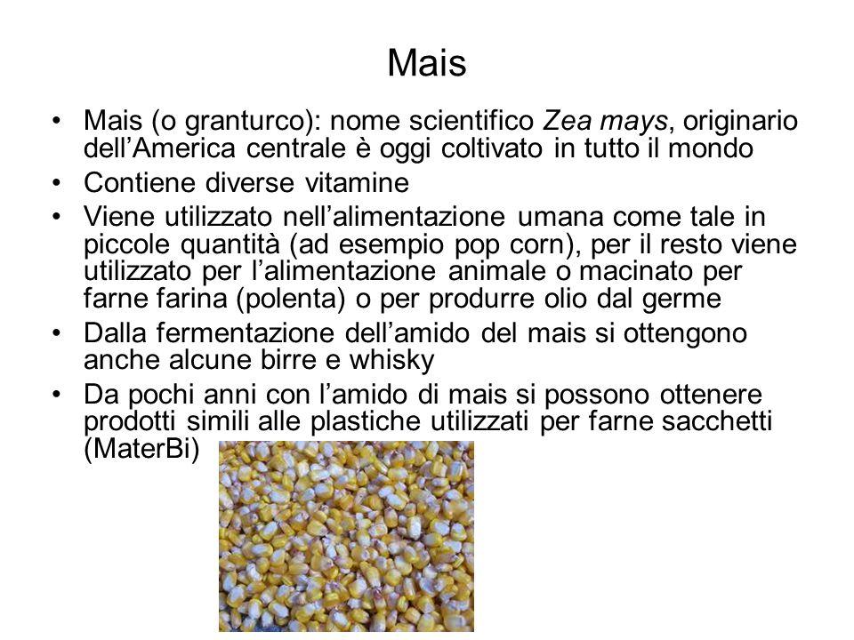 Mais Mais (o granturco): nome scientifico Zea mays, originario dell'America centrale è oggi coltivato in tutto il mondo Contiene diverse vitamine Vien