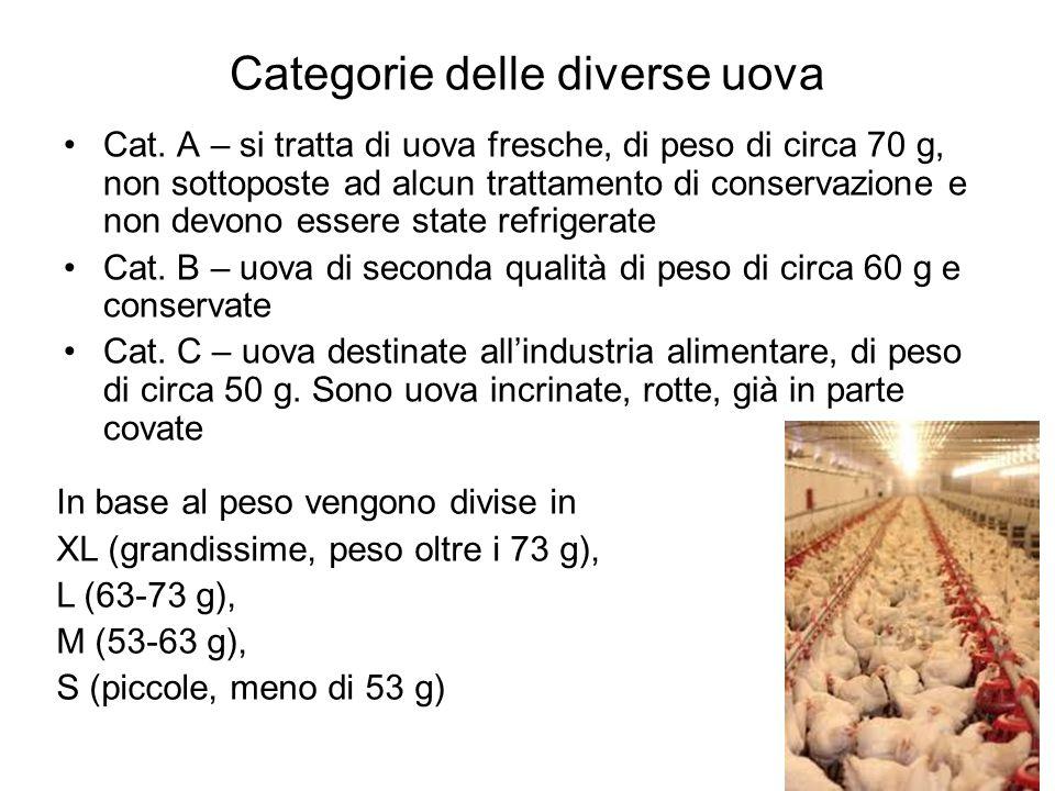 Categorie delle diverse uova Cat. A – si tratta di uova fresche, di peso di circa 70 g, non sottoposte ad alcun trattamento di conservazione e non dev