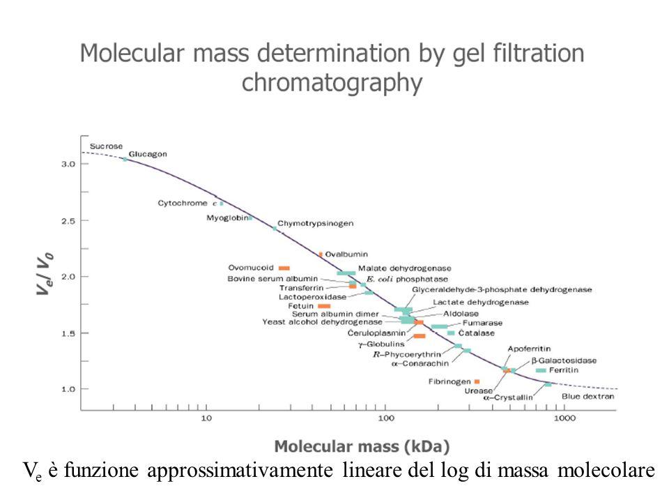 V e è funzione approssimativamente lineare del log di massa molecolare