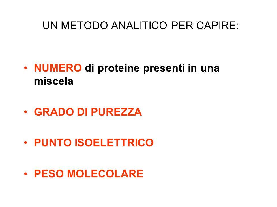 UN METODO ANALITICO PER CAPIRE: NUMERO di proteine presenti in una miscela GRADO DI PUREZZA PUNTO ISOELETTRICO PESO MOLECOLARE