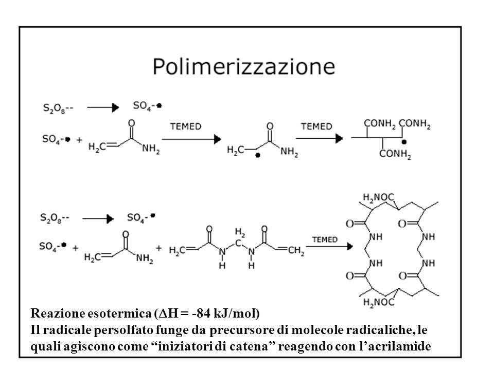 """Reazione esotermica (  H = -84 kJ/mol) Il radicale persolfato funge da precursore di molecole radicaliche, le quali agiscono come """"iniziatori di cate"""