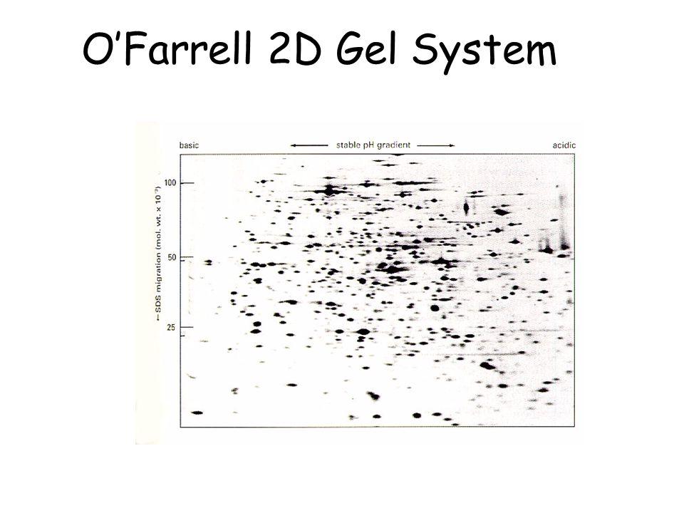 O'Farrell 2D Gel System