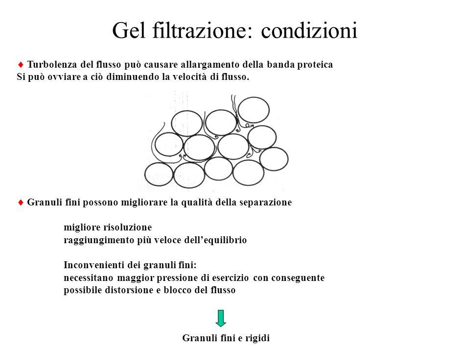 Gel filtrazione: condizioni  Turbolenza del flusso può causare allargamento della banda proteica Si può ovviare a ciò diminuendo la velocità di fluss