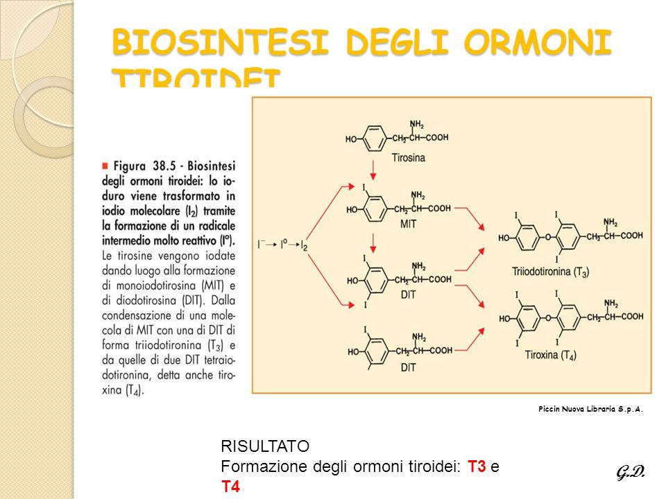 BIOSINTESI DEGLI ORMONI TIROIDEI Piccin Nuova Libraria S.p.A.