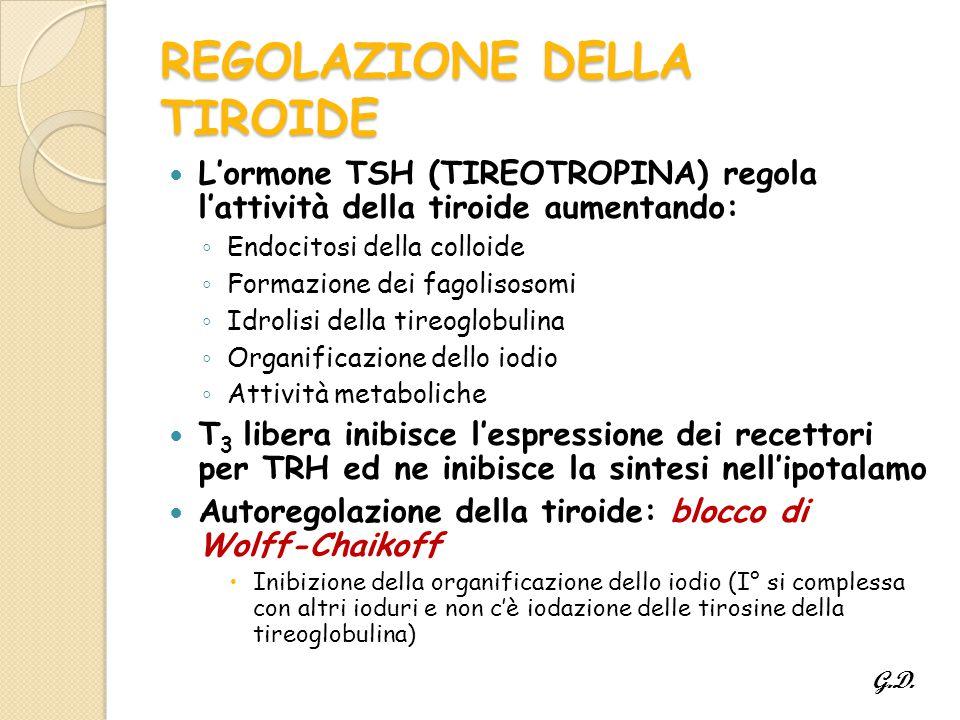 REGOLAZIONE DELLA TIROIDE L'ormone TSH (TIREOTROPINA) regola l'attività della tiroide aumentando: ◦ Endocitosi della colloide ◦ Formazione dei fagolisosomi ◦ Idrolisi della tireoglobulina ◦ Organificazione dello iodio ◦ Attività metaboliche T 3 libera inibisce l'espressione dei recettori per TRH ed ne inibisce la sintesi nell'ipotalamo Autoregolazione della tiroide: blocco di Wolff-Chaikoff  Inibizione della organificazione dello iodio (I° si complessa con altri ioduri e non c'è iodazione delle tirosine della tireoglobulina) G.D.