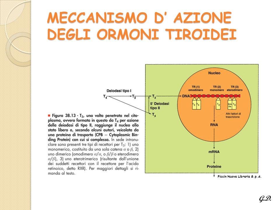 MECCANISMO D' AZIONE DEGLI ORMONI TIROIDEI Piccin Nuova Libraria S.p.A. G.D.