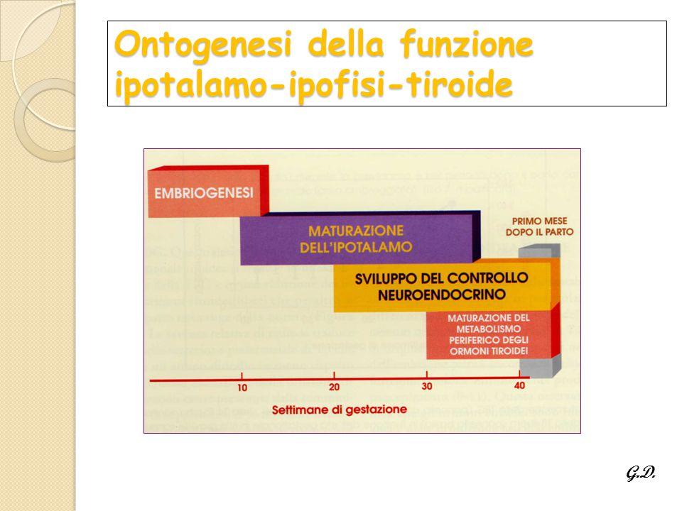 Ontogenesi della funzione ipotalamo-ipofisi-tiroide G.D.
