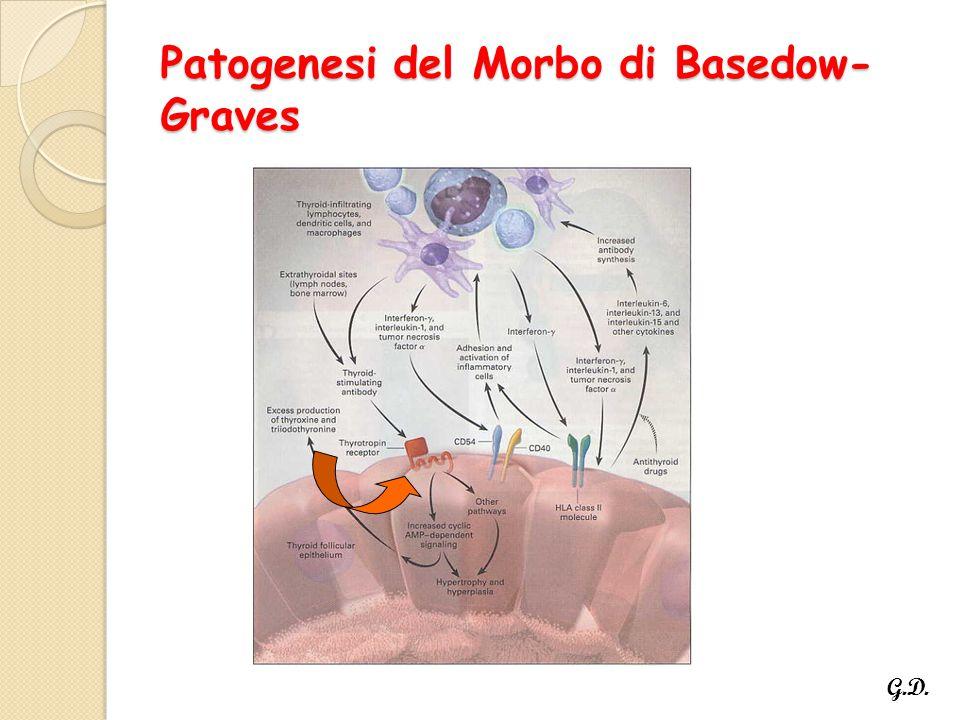 Patogenesi del Morbo di Basedow- Graves G.D.