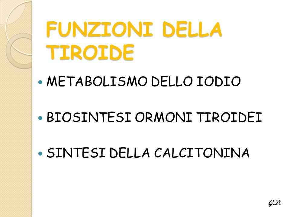 FUNZIONI DELLA TIROIDE METABOLISMO DELLO IODIO BIOSINTESI ORMONI TIROIDEI SINTESI DELLA CALCITONINA G.D.