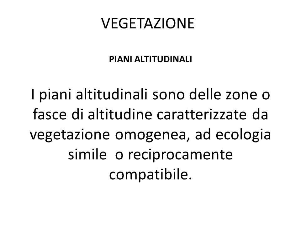 Orniello: Fraxinus ornus Le foglie sono composte.