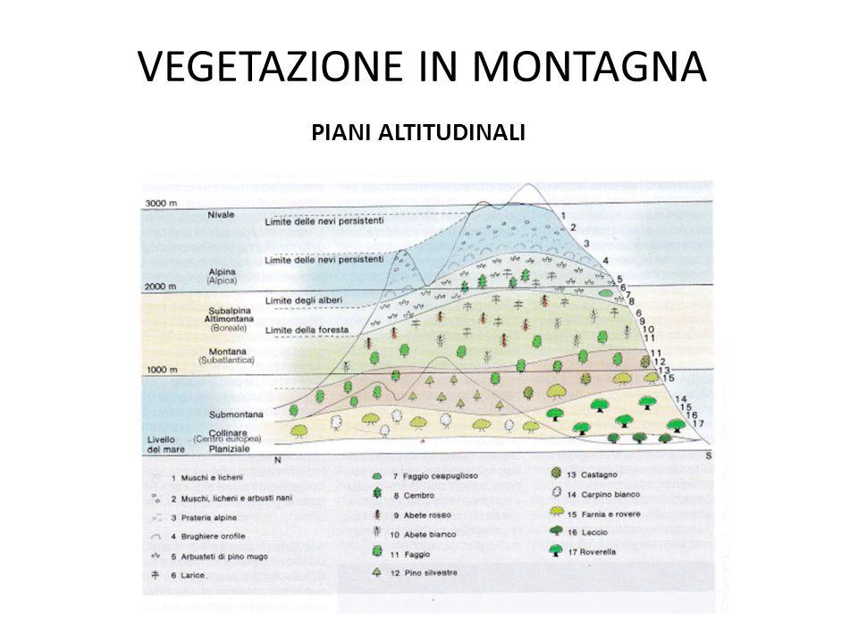 Successione dei piani altitudinali Piano nivale m 4000-2600 Piano alpino m 2600-2000 Piano montano m 2000-1200 Piano sub-montano m 1200-400 Piano basale m 400-0