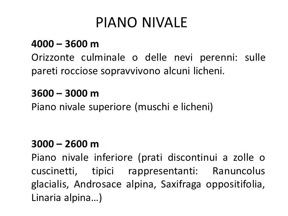 PIANO ALPINO 2600-2400 m Piano Alpino superiore: prati continui a graminacee.