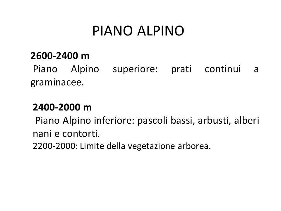 PIANO MONTANO 2000-1400 m Piano Montano superiore: boschi di conifere: laricete, cembrete e peccete.