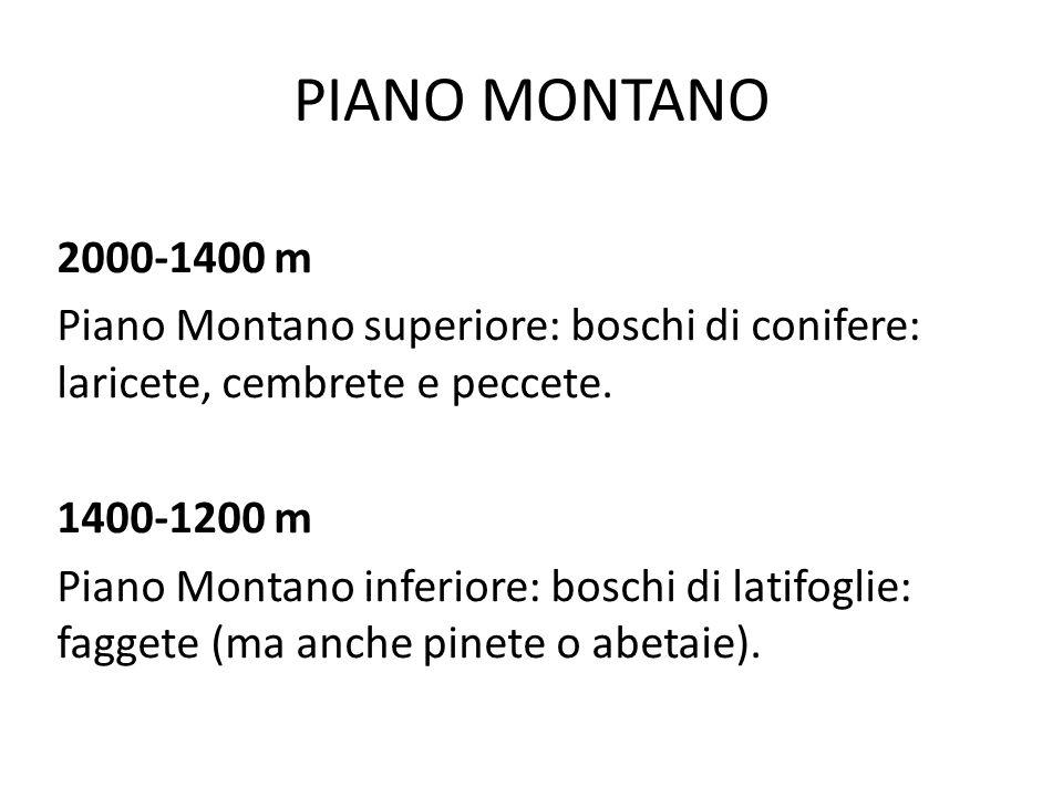 PIANO SUB-MONTANO 1200-800 m Piano sub-montano superiore (querce mesofile: cioè querce che amano un clima fresco e umido, faggi, castagni, presenza di conifere).