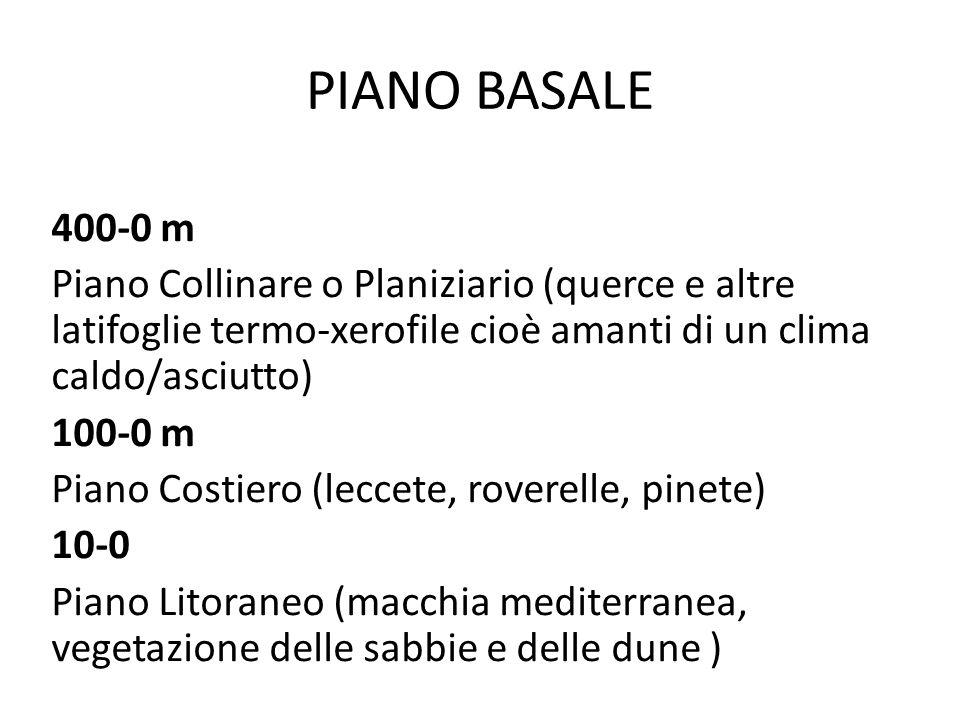 Fam Rosacee Sorbo montano o Farinaccio: Sorbus aria Albero tipico della fascia montana, alto 12-15 m.