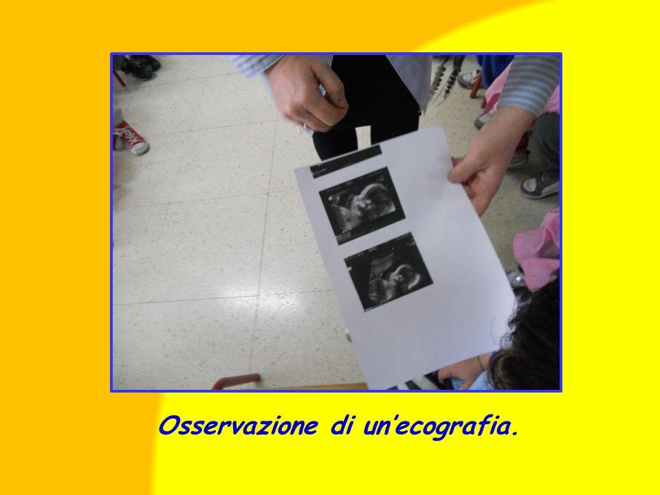 Osservazione di un'ecografia.
