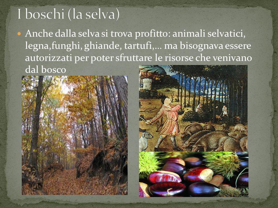 Anche dalla selva si trova profitto: animali selvatici, legna,funghi, ghiande, tartufi,… ma bisognava essere autorizzati per poter sfruttare le risors