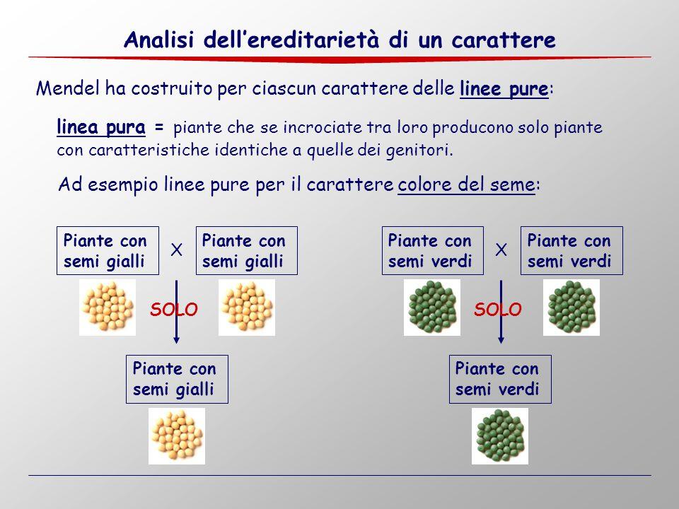 Analisi dell'ereditarietà di un carattere XX SOLO Piante con semi gialli Piante con semi gialli Piante con semi gialli Piante con semi verdi Piante co