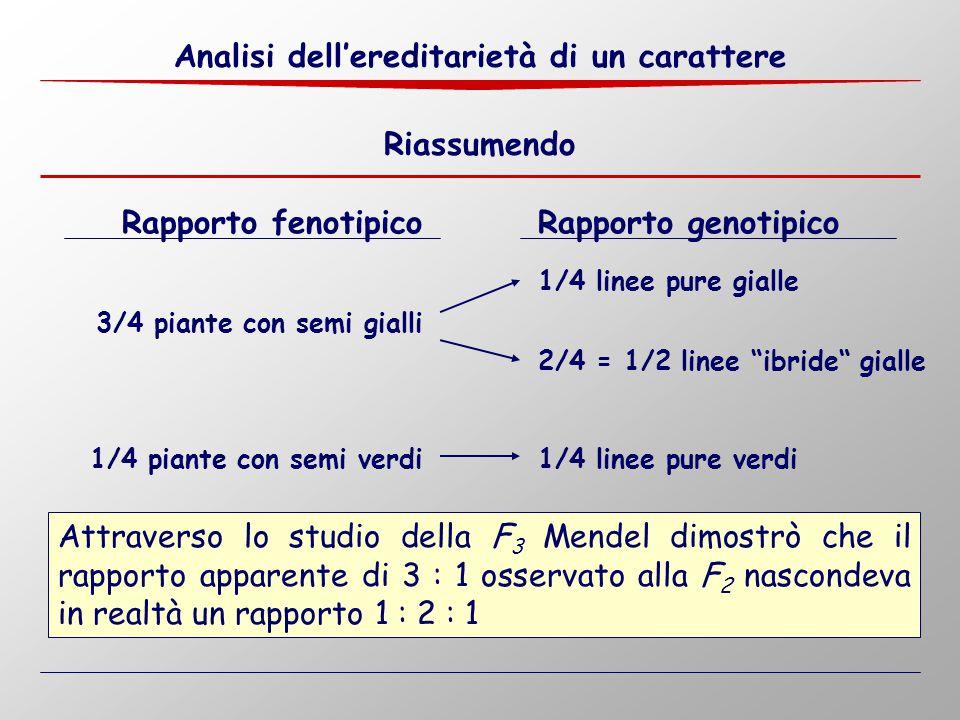 """3/4 piante con semi gialli 1/4 piante con semi verdi 1/4 linee pure gialle 1/4 linee pure verdi 2/4 = 1/2 linee """"ibride"""" gialle Attraverso lo studio d"""