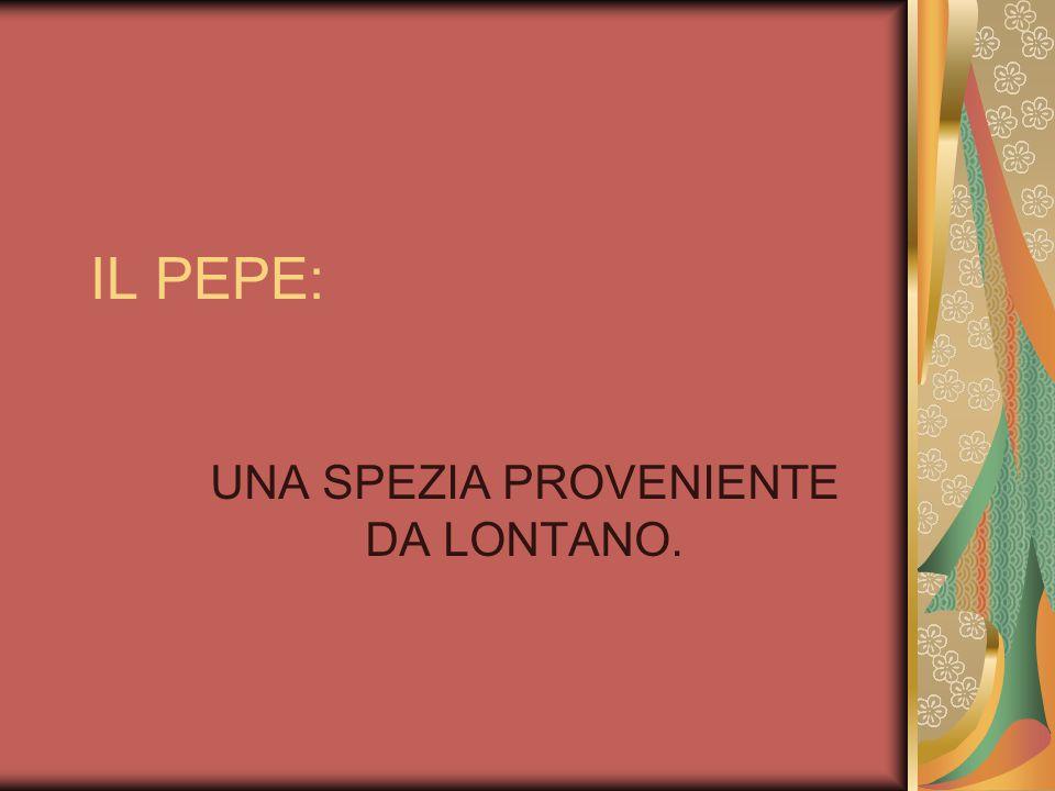 Pepe lungo (Piper longum) è una pianta della famiglia delle Piperaceae, coltivata per i suoi frutti, che vengono essiccati ed utilizzati come spezie e condimento.