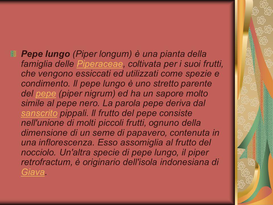 Pepe lungo (Piper longum) è una pianta della famiglia delle Piperaceae, coltivata per i suoi frutti, che vengono essiccati ed utilizzati come spezie e