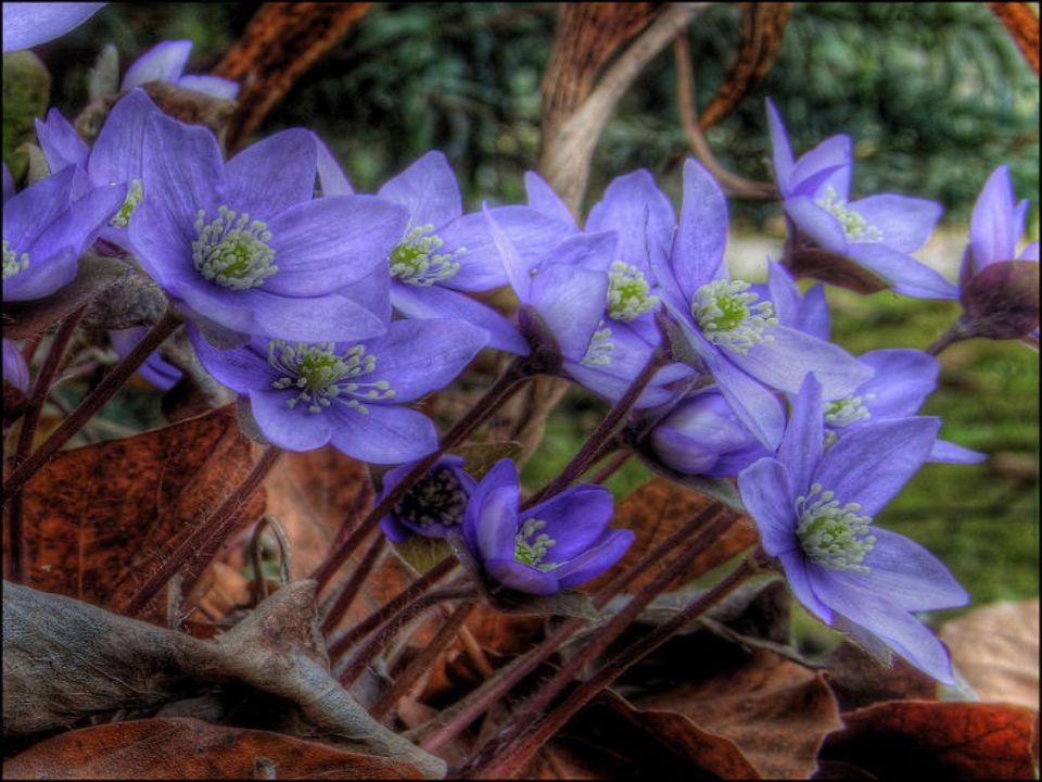 È maggio A maggio non basta un fiore. Ho visto una primula: è poco. Vuoi nel prato le prataiole: è poco: vuole nel bosco il croco. È poco: vuole le vi