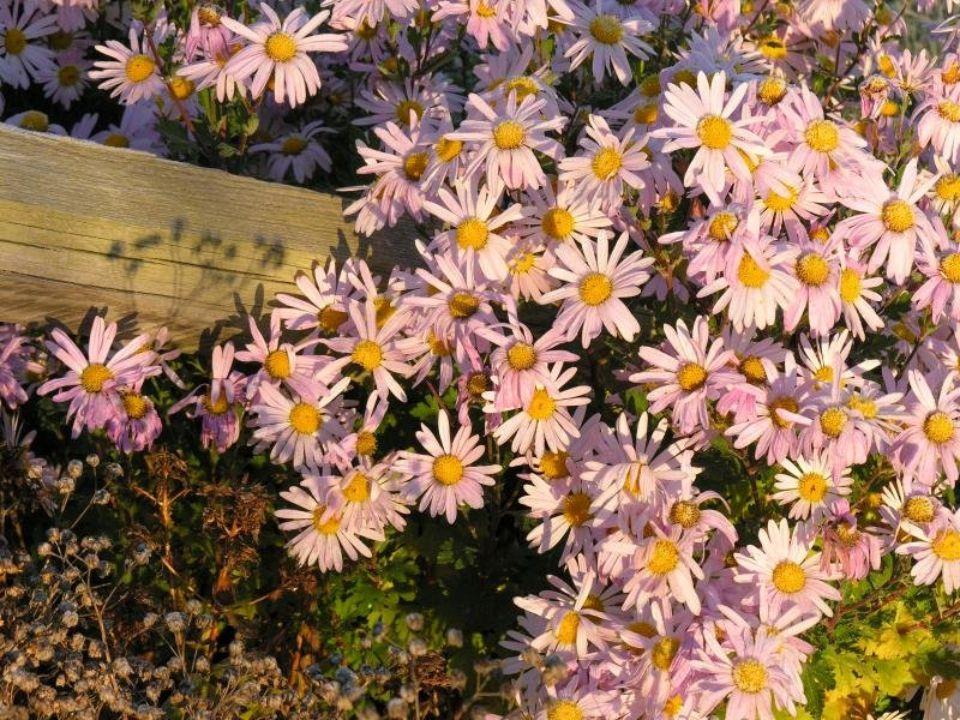 Fra i roseti Di maggio fra i roseti in vecchie ville negli orti abbandonati, un sole attonito e sbianchito scalda i silenzi di angoli perduti. Oltre i