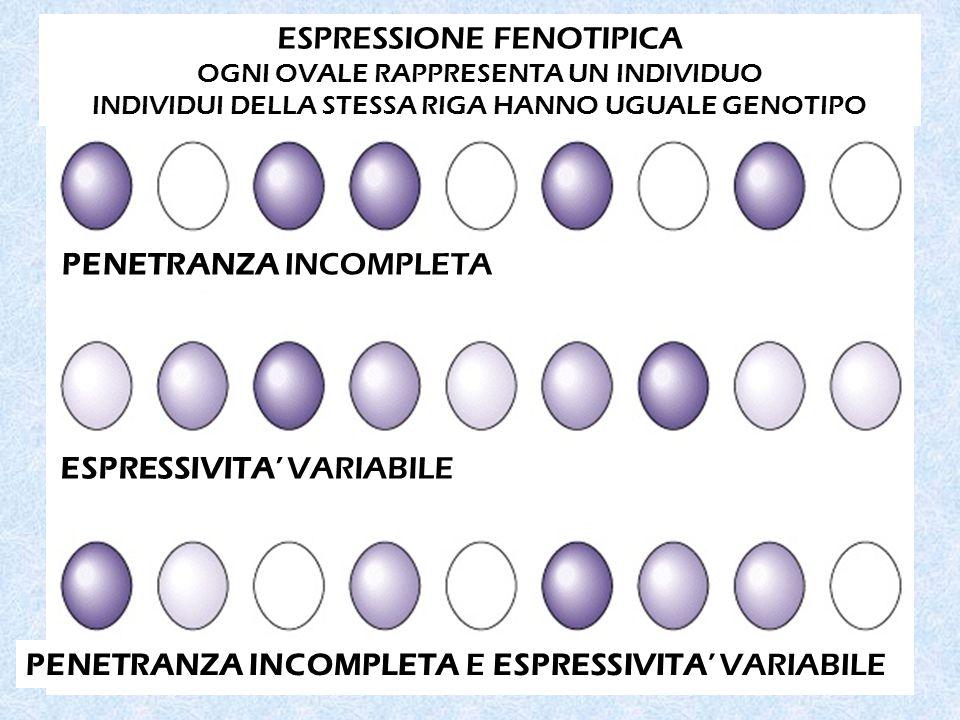ESPRESSIONE FENOTIPICA OGNI OVALE RAPPRESENTA UN INDIVIDUO INDIVIDUI DELLA STESSA RIGA HANNO UGUALE GENOTIPO PENETRANZA INCOMPLETA ESPRESSIVITA' VARIABILE PENETRANZA INCOMPLETA E ESPRESSIVITA' VARIABILE