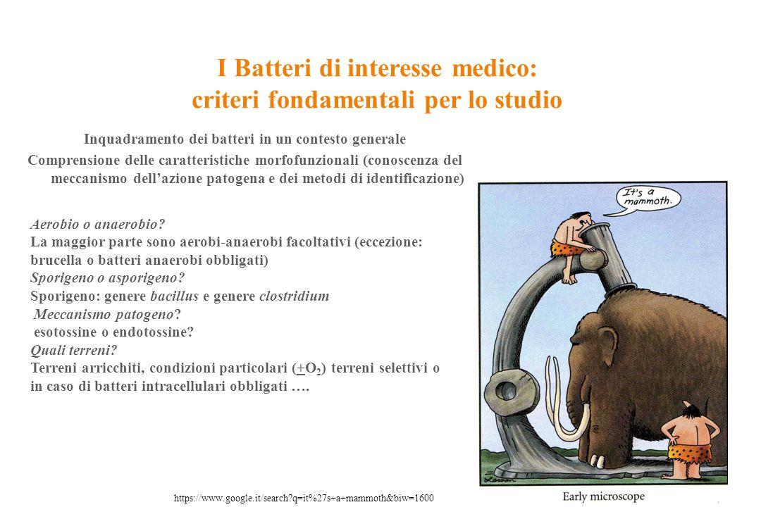 I Batteri di interesse medico: criteri fondamentali per lo studio Cocco: ne deduciamo automaticamente che: È un batterio Gram positivo Asporigeno Immobile Produttore di esotossine