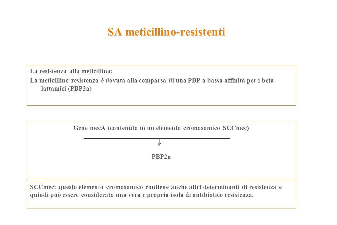 SA meticillino-resistenti La resistenza alla meticillina: La meticillino resistenza è dovuta alla comparsa di una PBP a bassa affinità per i beta latt