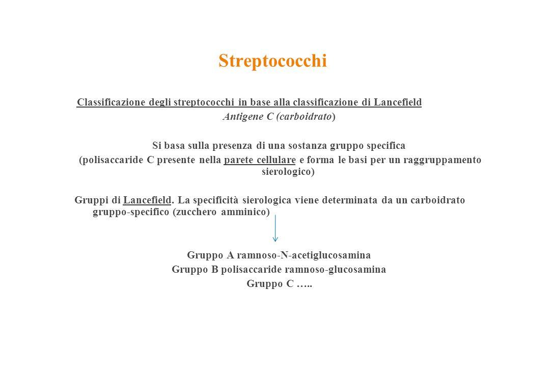 Streptococchi Classificazione degli streptococchi in base alla classificazione di Lancefield Antigene C (carboidrato) Si basa sulla presenza di una so