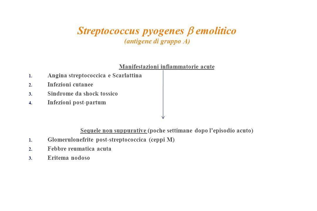 Streptococcus pyogenes  emolitico (antigene di gruppo A) Manifestazioni infiammatorie acute 1. Angina streptococcica e Scarlattina 2. Infezioni cutan