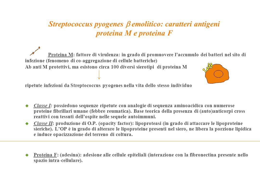 Streptococcus pyogenes  emolitico: caratteri antigeni proteina M e proteina F Proteina M: fattore di virulenza: in grado di promuovere l'accumulo dei