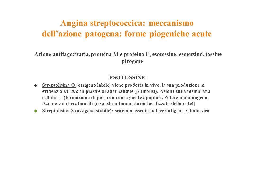 Angina streptococcica: meccanismo dell'azione patogena: forme piogeniche acute Azione antifagocitaria, proteina M e proteina F, esotossine, esoenzimi,