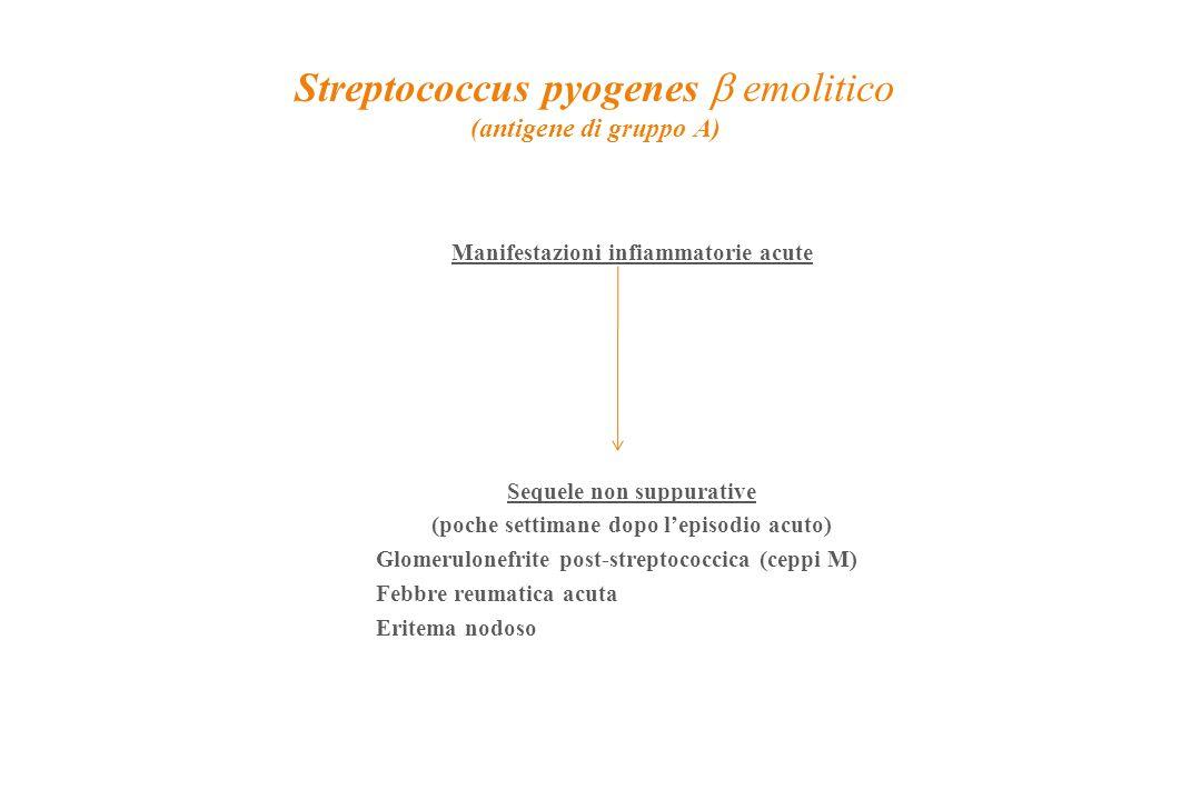 Streptococcus pyogenes  emolitico (antigene di gruppo A) Manifestazioni infiammatorie acute Sequele non suppurative (poche settimane dopo l'episodio