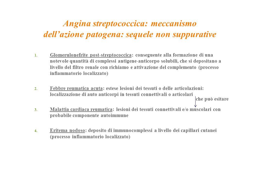 Angina streptococcica: meccanismo dell'azione patogena: sequele non suppurative 1. Glomerulonefrite post-streptococcica: conseguente alla formazione d
