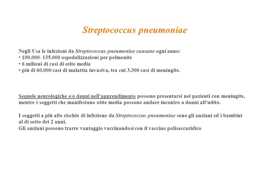 Negli Usa le infezioni da Streptococcus pneumoniae causano ogni anno: 100.000- 135.000 ospedalizzazioni per polmonite 6 milioni di casi di otite media