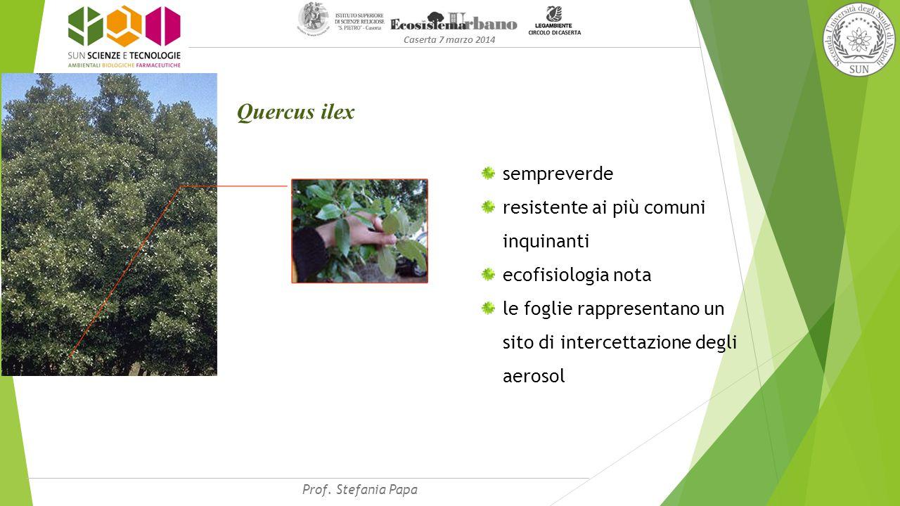 Caserta 7 marzo 2014 Quercus ilex sempreverde resistente ai più comuni inquinanti ecofisiologia nota le foglie rappresentano un sito di intercettazione degli aerosol Prof.