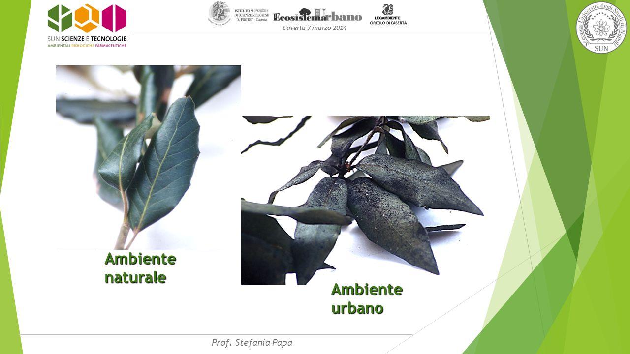 Caserta 7 marzo 2014 Ambiente naturale Ambiente urbano Prof. Stefania Papa